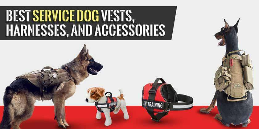 Service Dog Vests Reviews and Buying Guide Top of Page Image