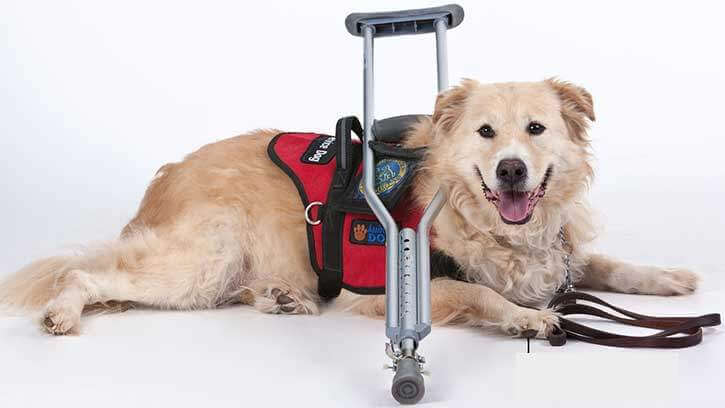 Service Dog With Crutches