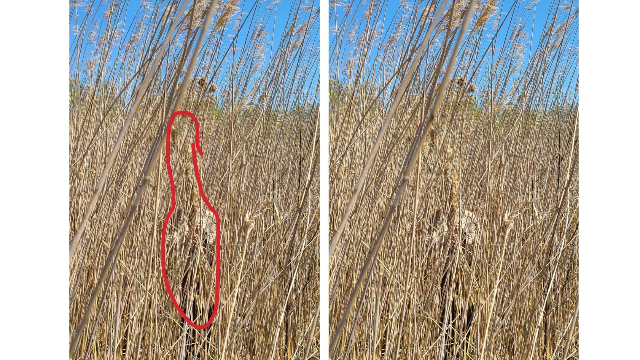 Example of Ghillie in wheat grass